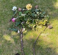 Gabriella's Garden Art
