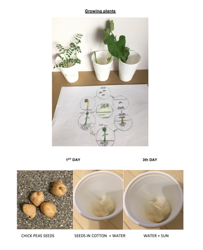 Matthew's Growing Plants