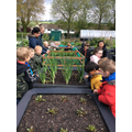 Looking at the vegetable plants