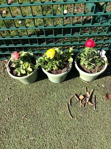 Flowers - science plants