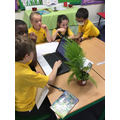 Studying and learning about plants