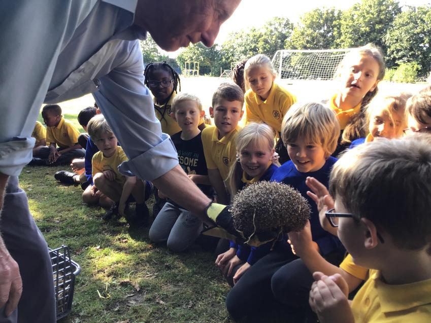 meeting hedgehogs