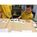 Animal & Habitat matching game