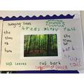 Collaborative work in English