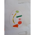 Ben's drawing of fruit and vegetables.