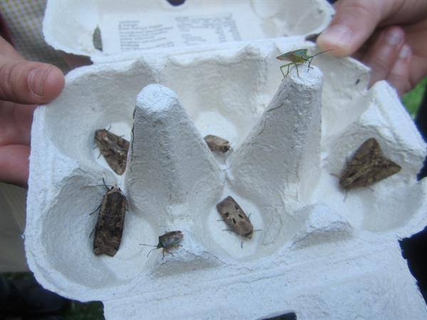 A Selection of Moths