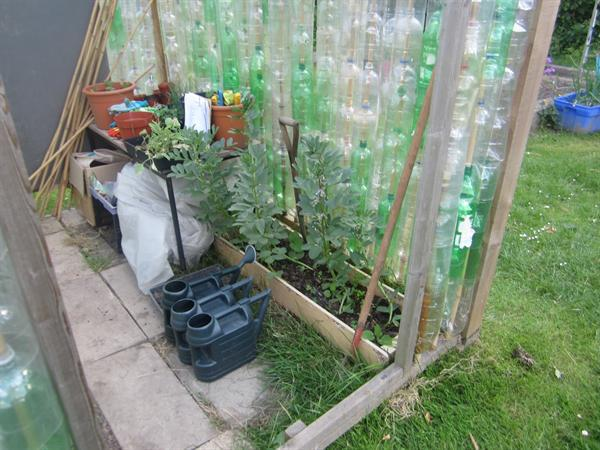 Plastic Bottle Greenhouse & Broad Beans Summer 15