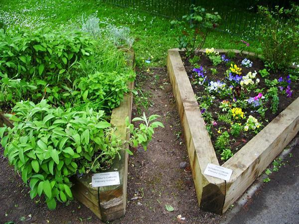 Gardening at Windmill Lane Community Garden