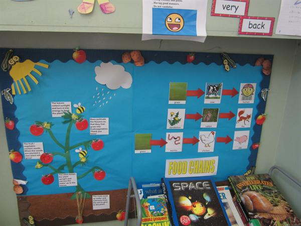 Food Chains Display