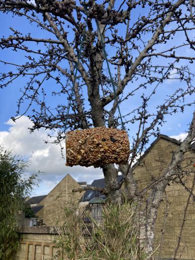 Bird feeder creations!