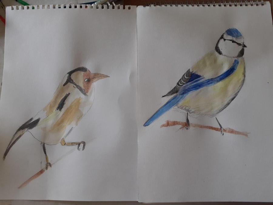 Roberto's bird art