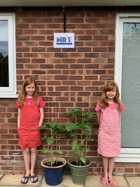 The twins' sunflower challenge