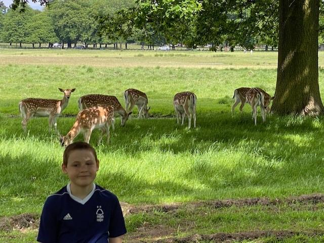 Deer Frank!