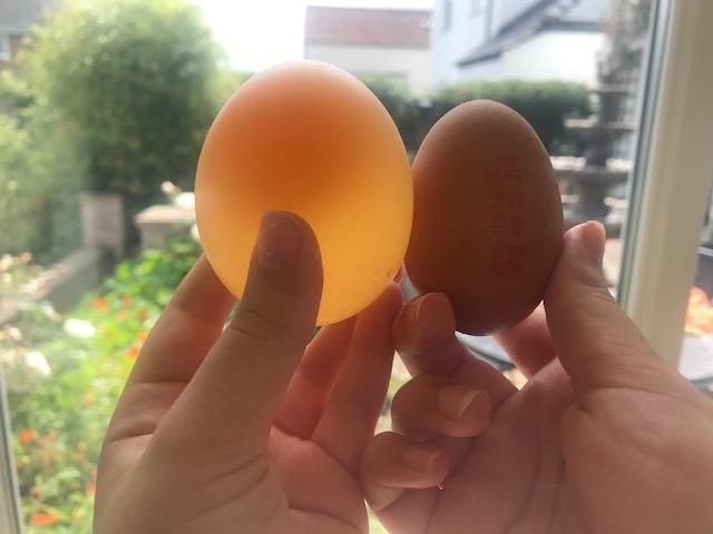 Rosa transforms an egg into a bouncy ball!