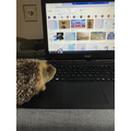 Mrs Johnson and Harry the Hedgehog working at home