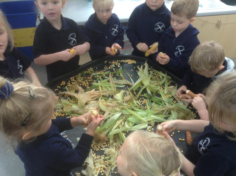 Shucking corn is fun and picking off the kernels really helps to strengthen our fingers.