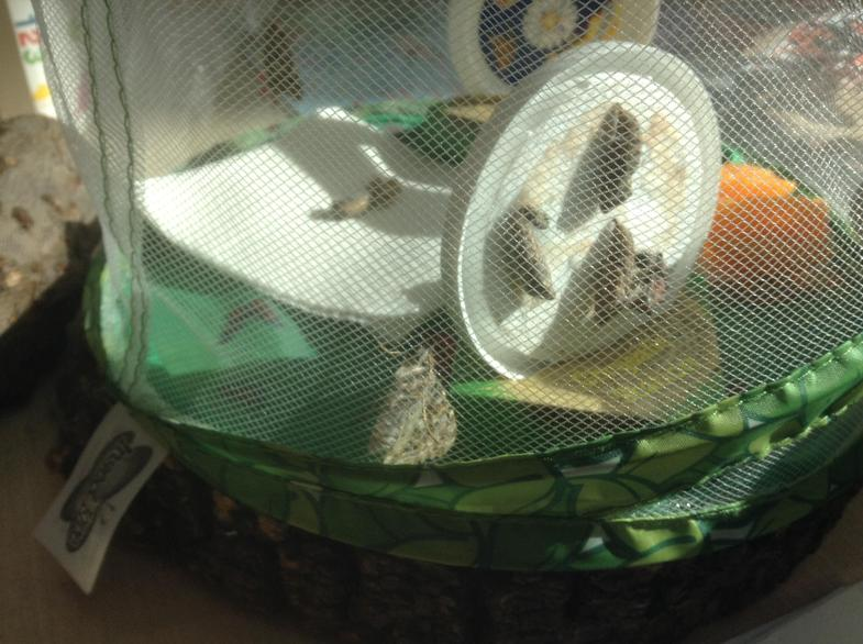It was exciting to see them emerge from their cocoons.