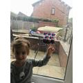 Emilia's mini greenhouse and bean