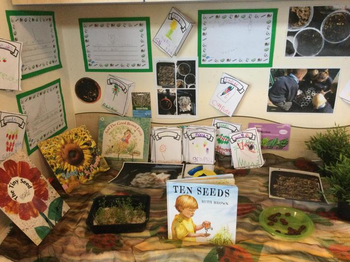 investigating seeds and seed packets
