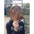 Leaves as big as our faces!