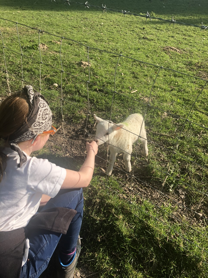 Ella fed a lamb while walking in the countryside.