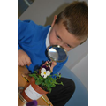 year 2 plant investigation