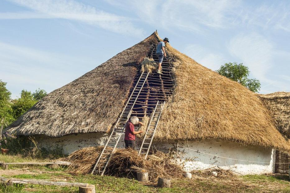 Learning To Thatch a Roof