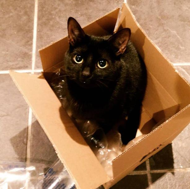 Muggle in a box