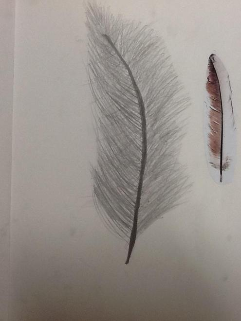 Art: Drawing Feathers