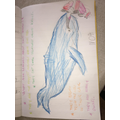 Remote Learning- Whale Facts