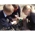 We used magnifying glasses and magnifying cups to closely observe bugs and insects.