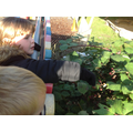Pupils experience and observe the amazing natural and human-constructed world around them.