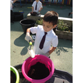 Planting flowers in our outdoor classroom