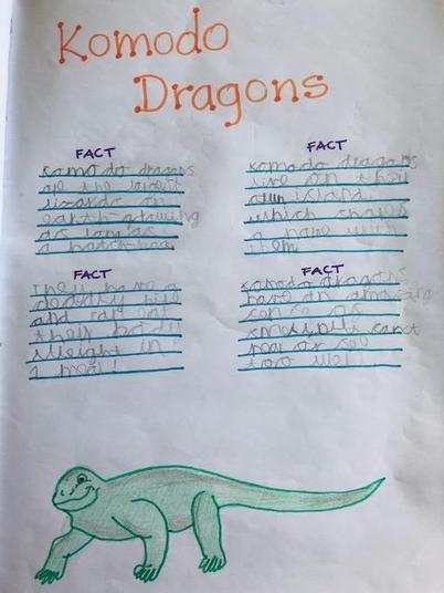 Nathan's Komodo Dragon facts.jpeg