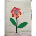 Jadon- parts of a plant