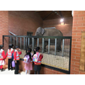 The elephants were huge and extremely cute.