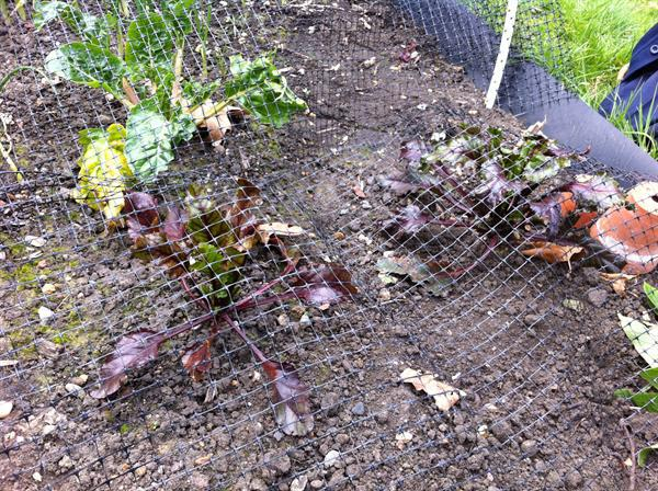 Visit to Ruskin Park Community Garden