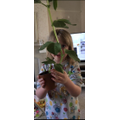 Wow! Take a look at Anya's beanstalk at home!