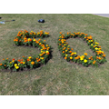 We all planted a marigold for our 50th Anniversary
