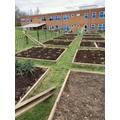 Newly dug and manure beds.