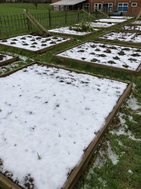 Snowy beds.