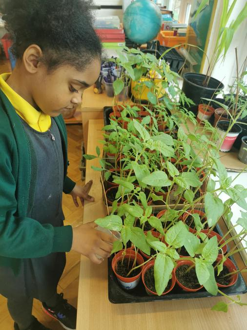 The children enjoy watering and observing their plants as they grow.