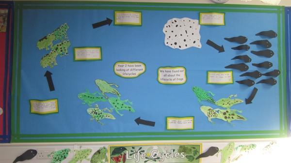 Children's work based on the lifecycle of a frog.
