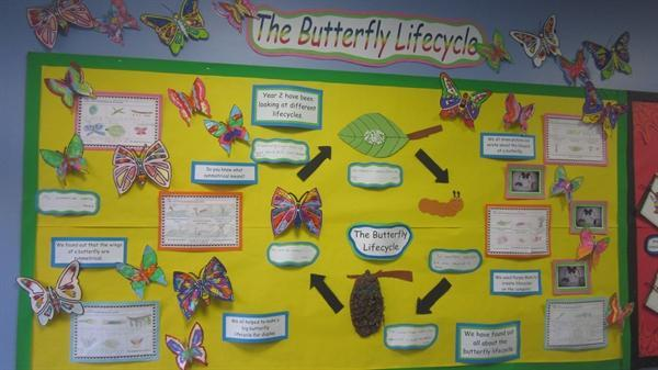 Children's work based on the butterfly lifecycle