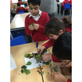 Investigating Plants