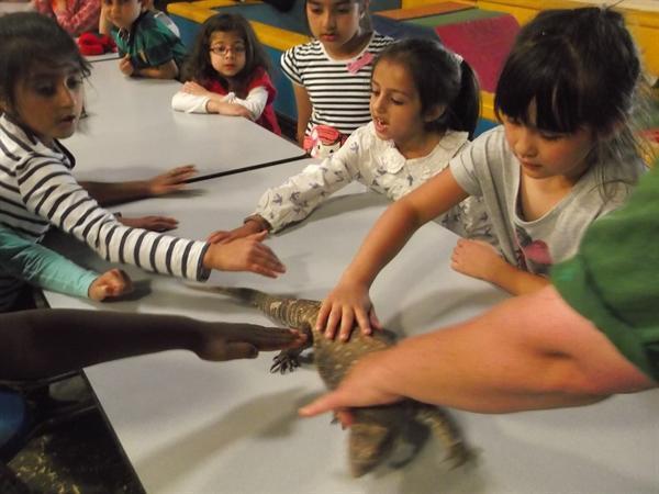 Yasmeen, Laiba and Shante stroking a lizard