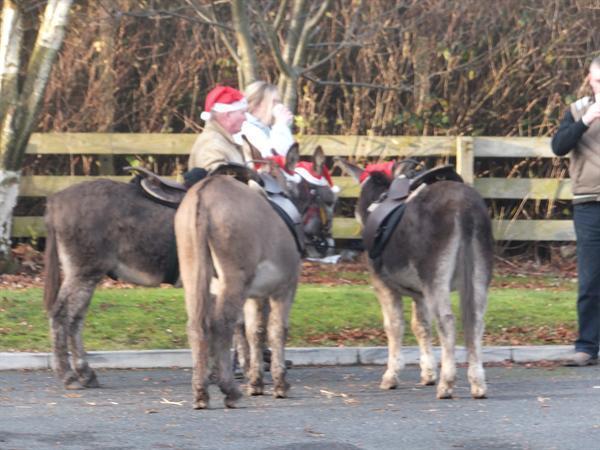Christmas Fayre 2012 Donkey Rides