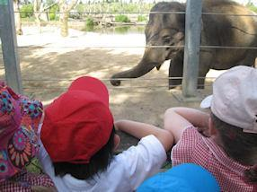 The children were excited to see an elephant.