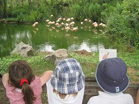 We watched the flamingos standing on one leg