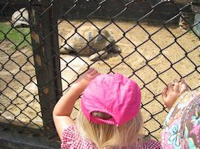We saw a very large tortoise.